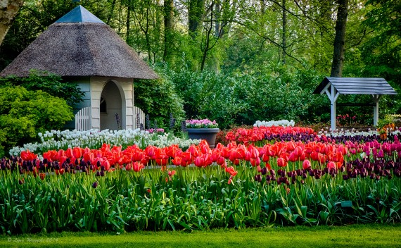 The Netherlands – Keukenhof Gardens – A Whole Lot Farther- Part 1