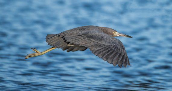 Celery Fields – Birds, Birds, Birds – Sarasota, Florida