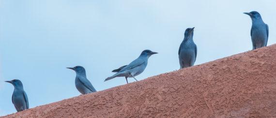 Cochiti – Birds, Birds, Birds – New Mexico – Part 4