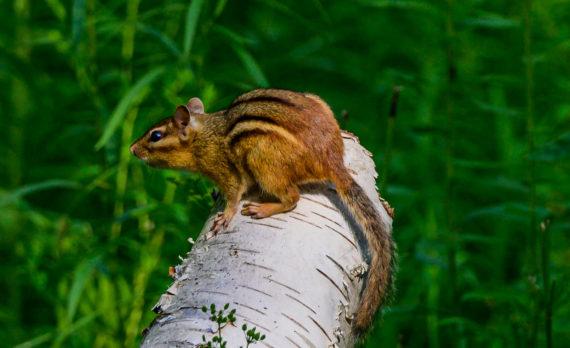 Thorne Swift Nature Preserve – Harbor Springs – Michigan – Part 2