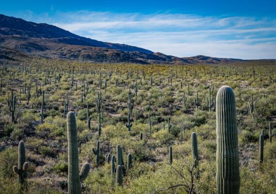 Tanque Verde Ranch – Tucson, AZ – Part 2